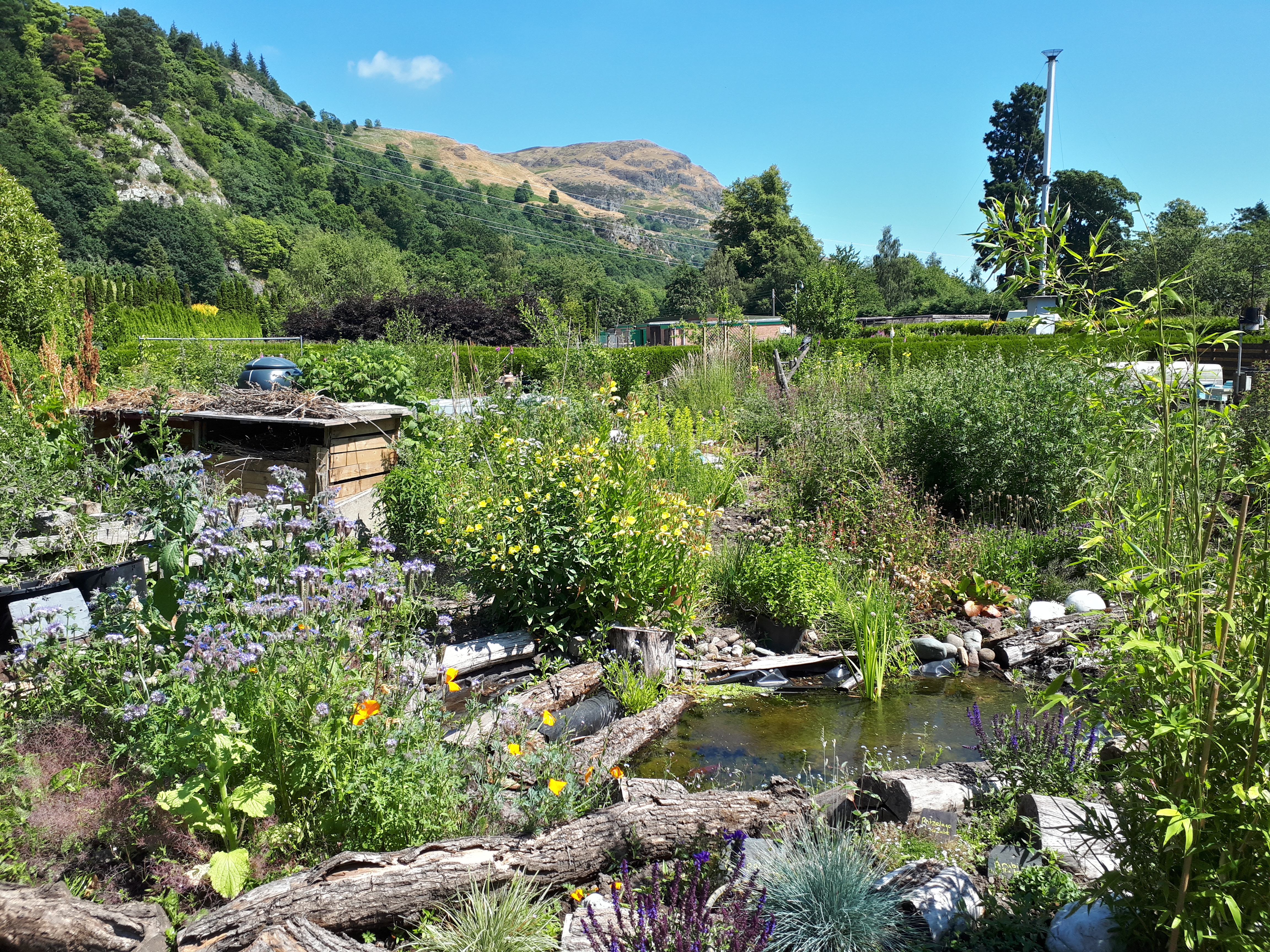 A picture of the garden, with Dumyat in the background